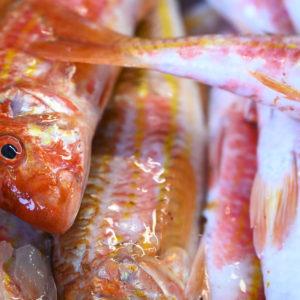 Pescado de Eurofish Roquetas: sano, limpio y de calidad